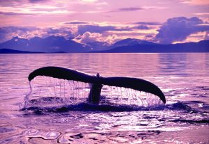 ' title='whale tail' height=